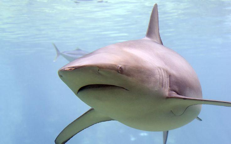 Evolución de los tiburones