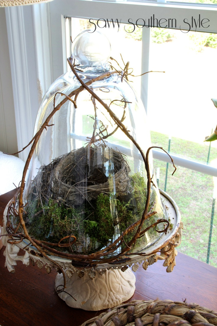 Bird's nest on moss.  I love the vines on the outside of the cloche!