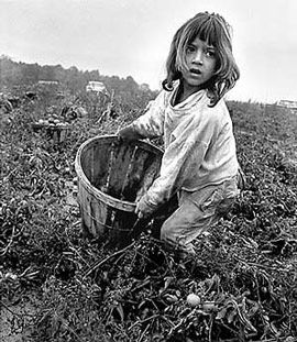 A Mexican-American migrant girl works in a tomato field in Indiana in 1968.