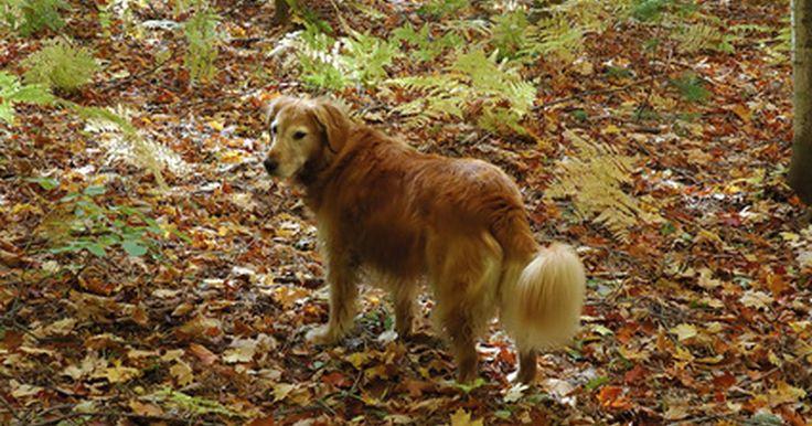 """Síntomas neurológicos de la enfermedad de Lyme en perros. La enfermedad de Lyme canina no suele causar síntomas neurológicos. Estos efectos poco comunes pero graves se suelen manifestar cuando la enfermedad se deja sin tratamiento por un período prolongado, de acuerdo al libro """"La naturaleza de la sanación animal"""". Consulta con tu veterinario para prevenir la enfermedad de Lyme antes de que ocurra. Si ..."""