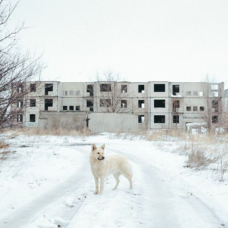 Good morning, @chrisnunnphoto here.  Konstantinovka, Donestk region, winter 2015. A stray dog outside the uncompleted apartment blocks where he lived with a pack of around 15 other dogs. I found out he was named Tuzik, a classic Soviet dog name, by the babushkas who brought food to the dogs during the long winter months. By @chrisnunnphoto #Ukraine #Donbass