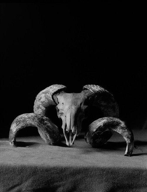 http://www.pinterest.com/jeniferregis7/skulls/