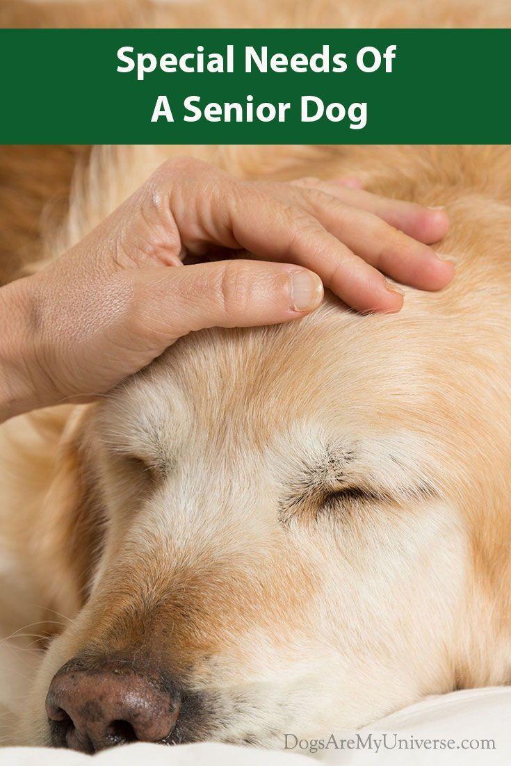 Caring For A Senior Dog Senior Dog Elderly Dog Care Dogs