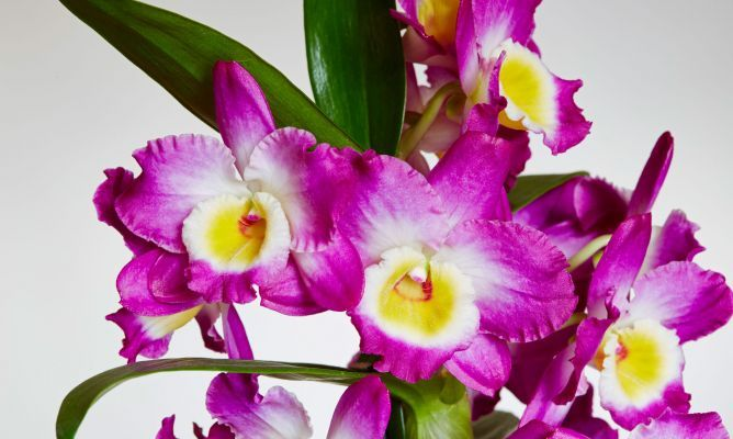 Recuperar orquídeas terrestres - Decogarden
