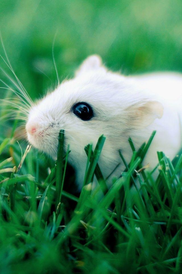 Grass Hamster Mobile Wallpaper - Mobiles Wall
