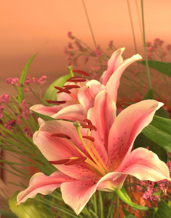 Рисунок папе, картинки с цветами лилии анимация