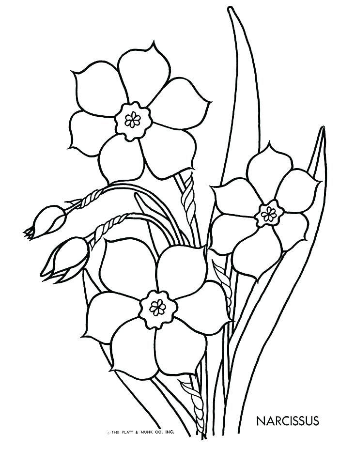 Daffodil Coloring Page Daffodil Coloring Page Daffodil Coloring Page Pencil Of Daffodils Coloring P Flores Para Colorir Riscos Para Pintura Ideias Para Pintura