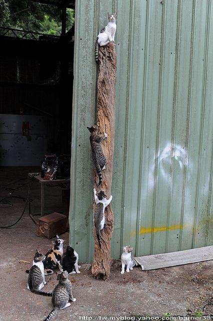 Pole climbing 101 at kitty cat university