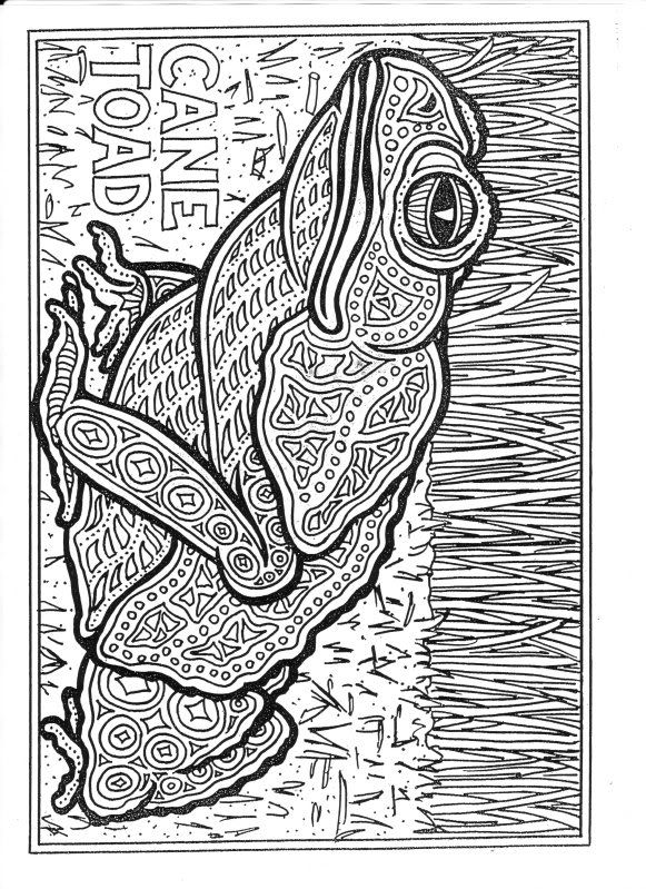 toad frog coloring page