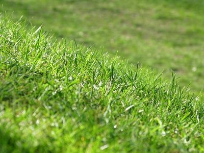 Sugar is a great way to get rid of weeds and keep your lawn's eco-system balanced. Plain table sugar spread on your lawn is an organic gardening method to keep weeds at bay.