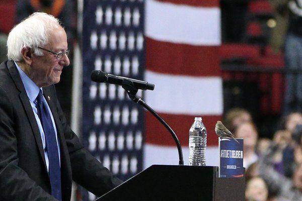 Crowd goes wild as bird lands on Sanders's lectern in Portland