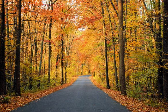 1. Seasons. We are famous for our amazing fall foliage, but we really do have all four seasons here.