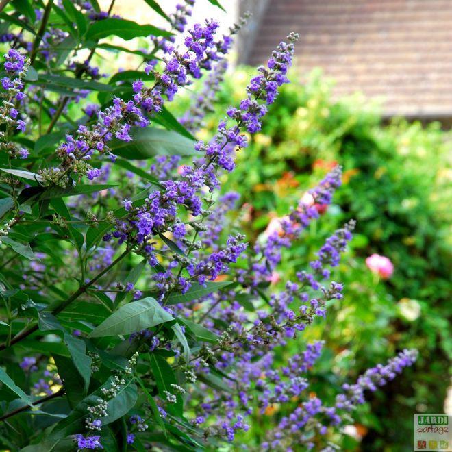 Les 25 meilleures id es de la cat gorie jardin sec sur - Comment passer en floraison ...