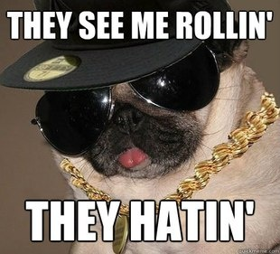 Gangster Pug. They See Me Rollin' They Hatin'