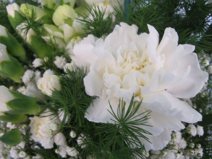 piante e fiori - garofani