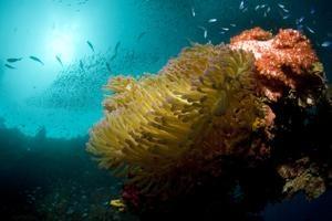 tripbucket | Dream: Wreck Dive Chuuk (Truk) Lagoon (Fujikawa Maru), Micronesia