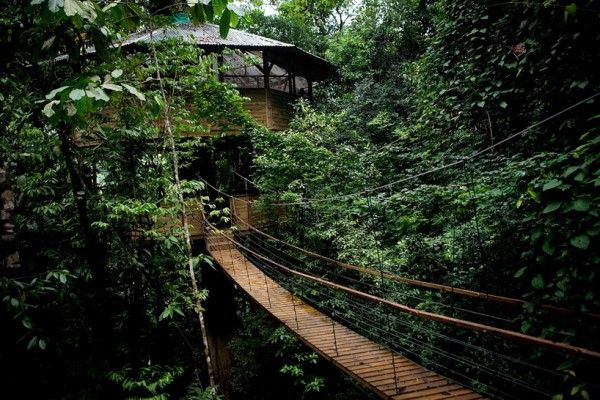 Beautiful Tree House Designs Driving You Back To Nature: Stunning Rope Bridge Ideas Wood Steps Sustainable Treehouse Community