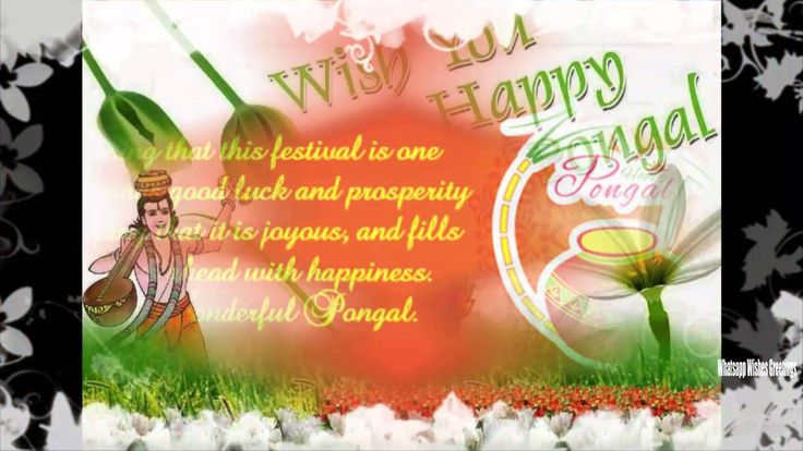 Happy pongal 2016 Wallpapers | Happy pongal 2016 Latest Wishes/Greetings...