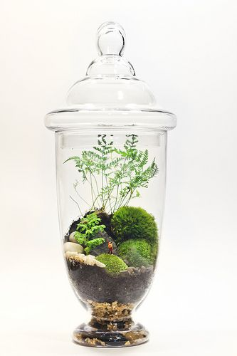 Tall Apothecary Forest Terrarium