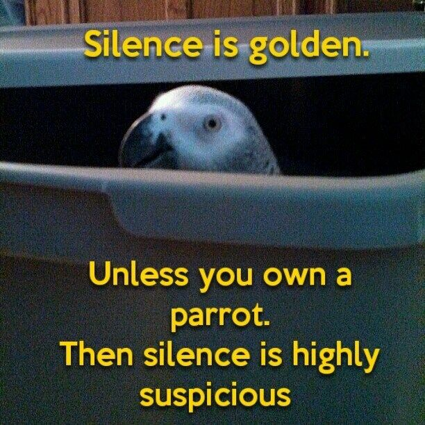 Silence is golden unless you own a parrot. then silence is highly suspicious.