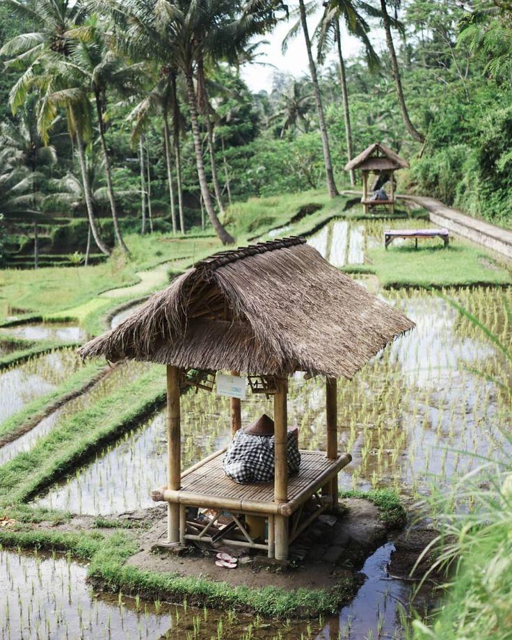 Les rizières en terrasses du temple de Gunung Kawi. Je crois qu'Avril est la parfaite saison pour visiter Bali : il fait hyper chaud, beau, avec seulement quelques averses et la végétation est luxuriante. Qu'est ce que c'est beau ! .(Plus d'images du temple en Stories)...#Bali #Indonesia #landscape #exploremore #livefolk #travel #peaceful #dondapaiser #solairesengages #skinprotectoceanrespect @eauthermaleavenefrance  #Regram via @trendymood