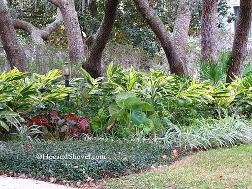 plant under oak tree