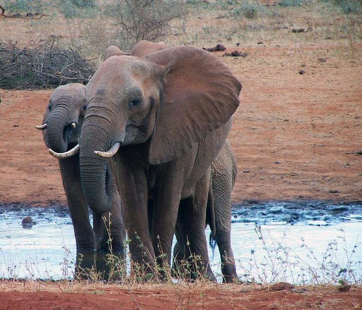Kövesse a Botswana-i rezervátum vadjait. ZöldMód Vadvilág élő közvetítések: http://www.zoldmod.hu/webkamera-botswana
