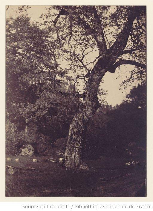 Titre : [Etude d'arbre] : [photographie] / [Gustave Le Gray]   Auteur : Le Gray, Gustave (1820-1884). Photographe   Date d'édition : 1855