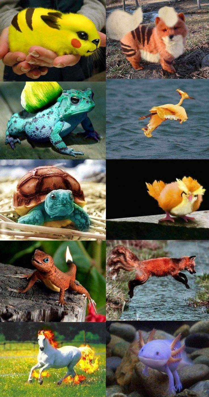 Pokemon real (The mudkip ((bottom right)) is my favorite!)