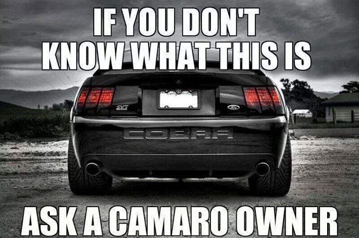 Terminator Mustang Problems