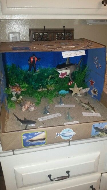 Shark Diorama is complete