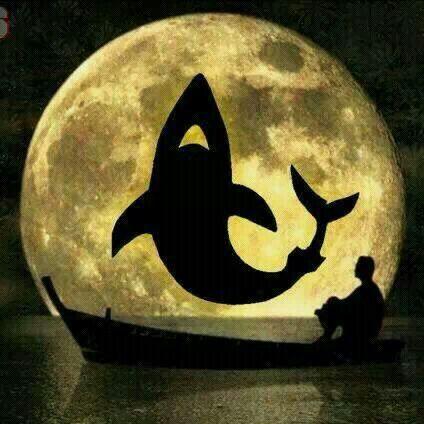 Super Tiburones Rojos ;) @Jose Luis Torres Martinez Rojos de Veracruz