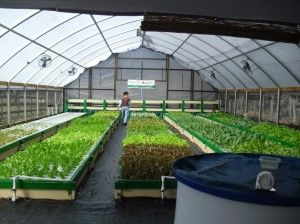 Murray Hallam's Practical Aquaponics Blog