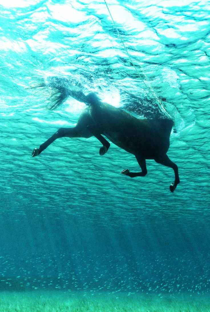 Pferd das schwimmt
