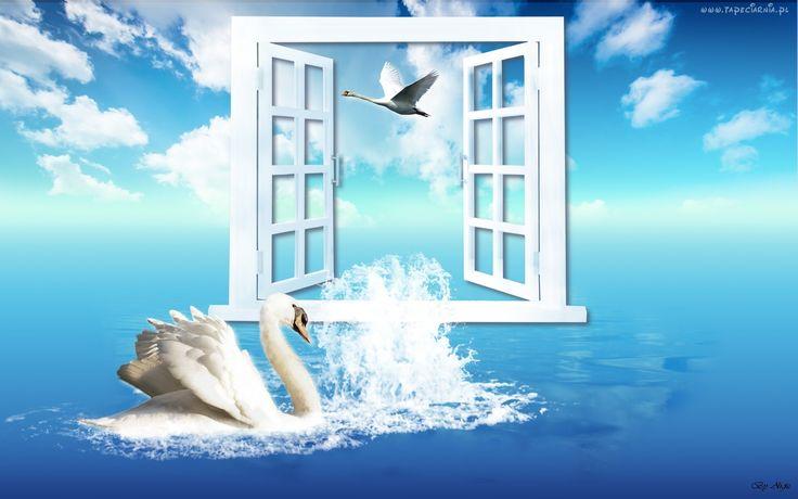 Łabędzie, Okno, Chmury
