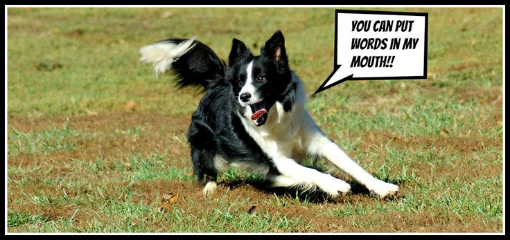 Pictures of Puppies | 35 Free Cute Border Collie Puppy Images