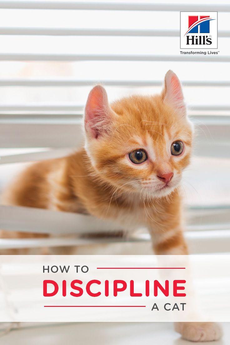 How to discipline a cat properly hills pet cats cat