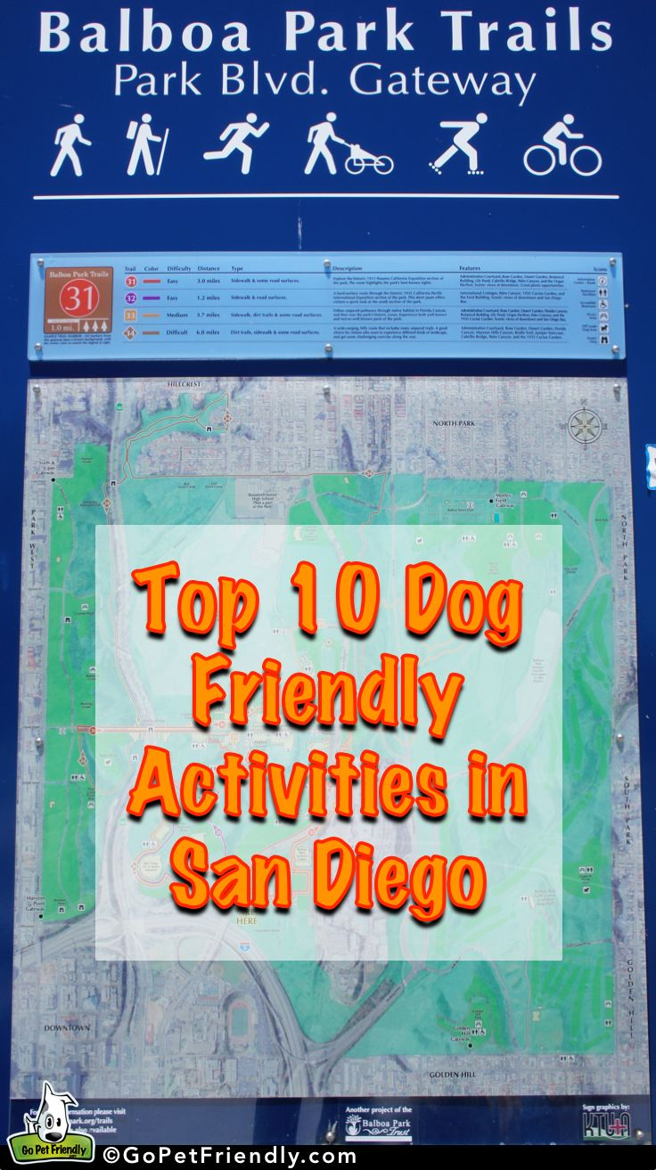 San Diego's Top 10 Dog Friendly Activities