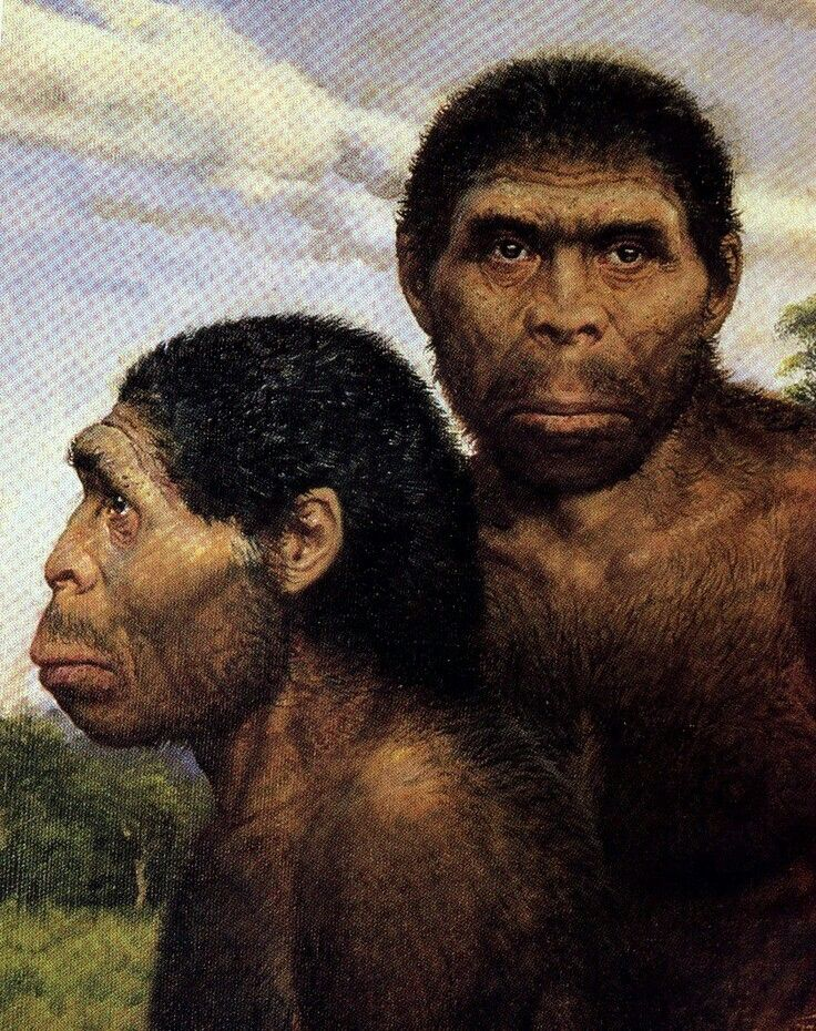 """an introduction to the history and analysis of homo erectus Bill gates reviews the book """"sapiens: a brief history of humankind"""" by  another  species, homo erectus, populated asia, and the island of."""