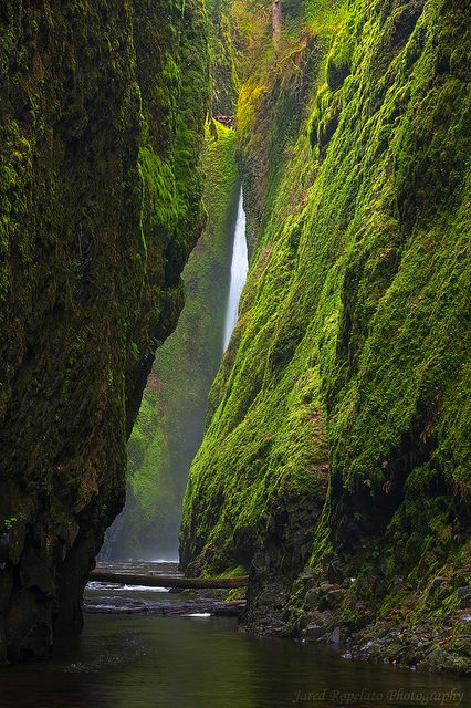 Oneonta Canyon Falls, Oregon. It's the Oneonta Gorge in the Columbia River Gorge. The ferns and moss make the walls look like a fairy tale, and visitors can walk through the creek on a warm summer day. This is on my TO DO list this summer!
