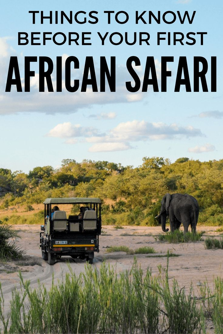 Things to know before you travel to Africa for your first safari