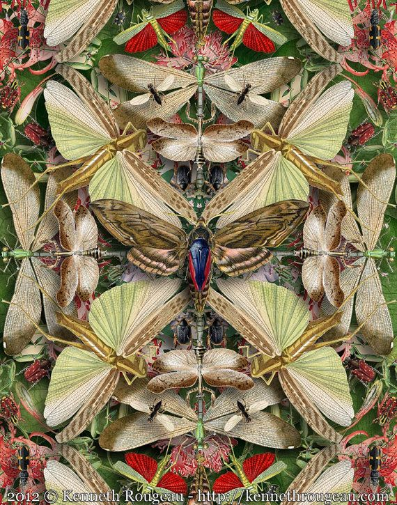 Forms of Nature #13: Insects  digital collage   by Kenneth Rougeau