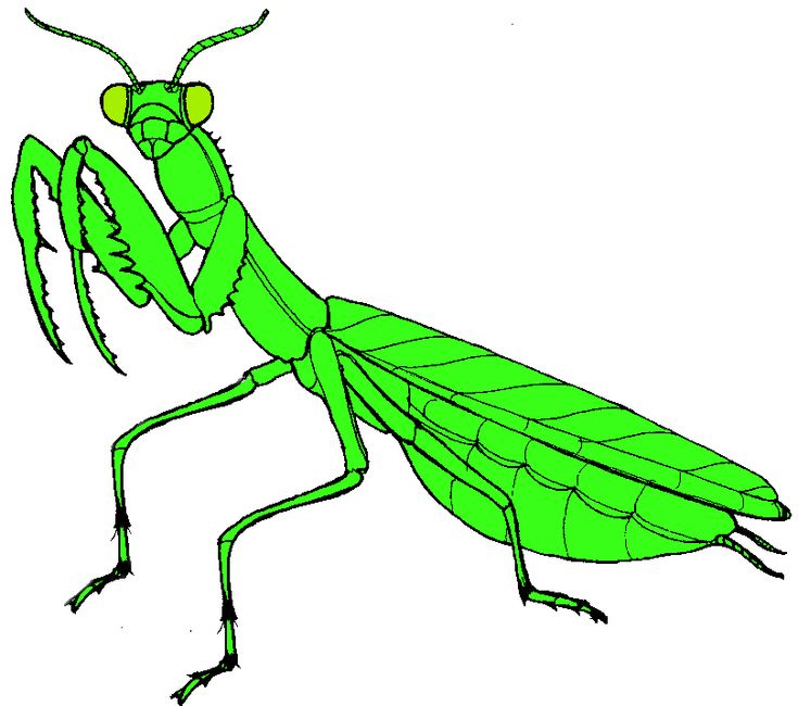 praying mantis clip art free clipart panda free