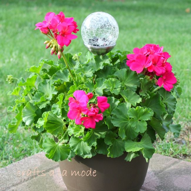 Crafts a la mode : Geranium with Solar Light Mother's Day Gift