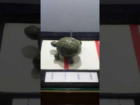 Velocidad de la tortuga ! Vuelta al mundo de la tortuga caminando a 1 ce...