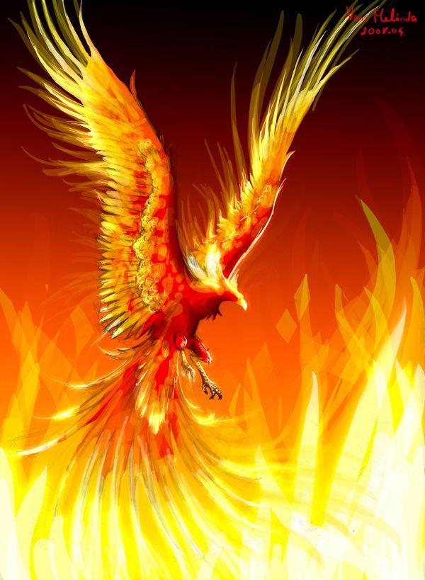 удивительного для картинки феникса высокого разрешения для