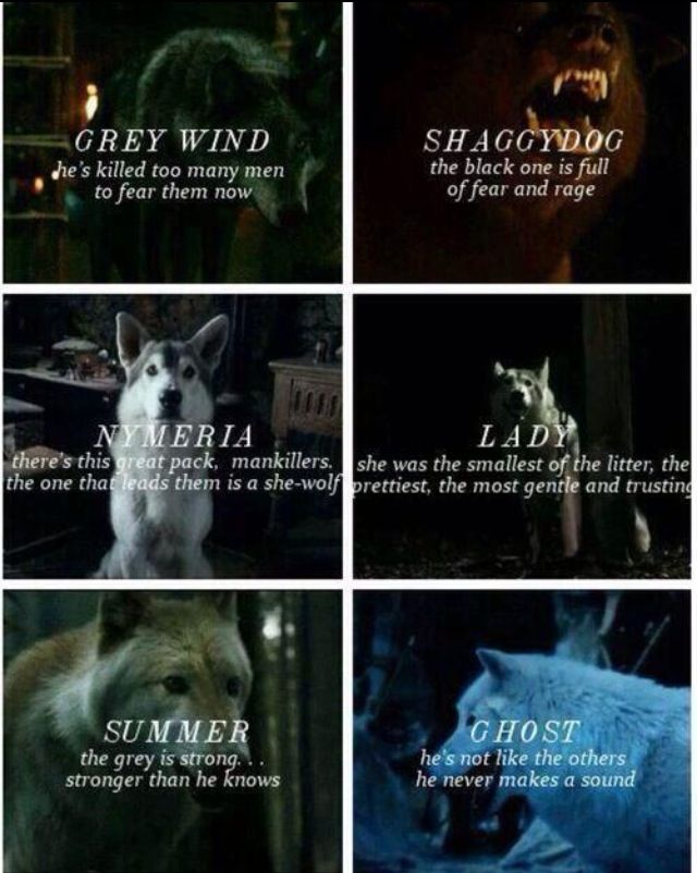 The Stark Direwolves Rob grey wind Jon Ghost Sansa Lady Arya Nymeria Bran Summer Rickon shaggy dog