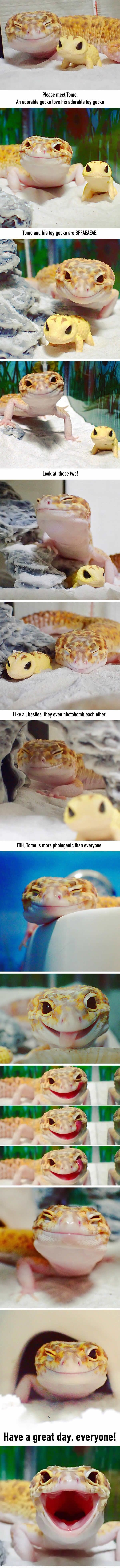 This Gecko Smiling With His Toy Gecko Is The Purest Thing You'll See Today - Album on Imgur