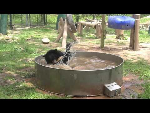 Save the Halong Bay Moon Bears - Travel with Kat - so wonderful to see rescued bears playing like this. Thank yo Animals Asia.