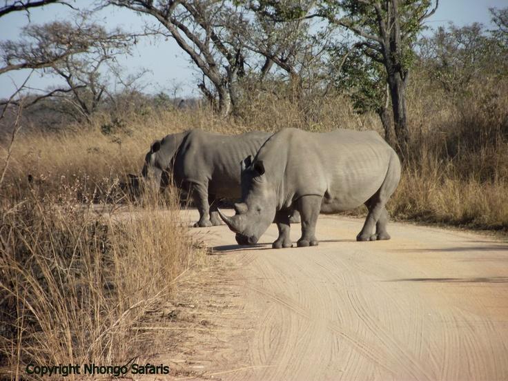 White Rhino 1.